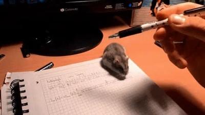 Enlace a Mascotas que no te dejan hacer los deberes