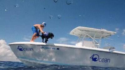 Enlace a Perro ayudando a limpiar el mar de basura contaminante