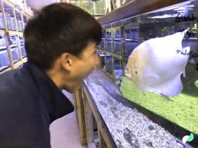 Enlace a Jugando con un pez a poner caras locas
