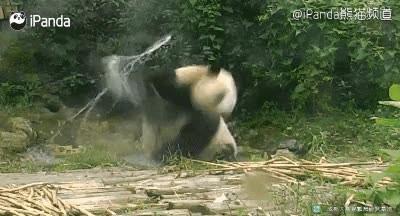 Enlace a El verdadero Kung Fu Panda