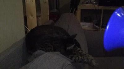 Enlace a Despertando al gato con una bocina