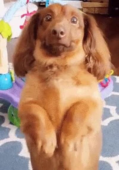 Enlace a Perros decididos a arruinar la mejor foto de tu hijo