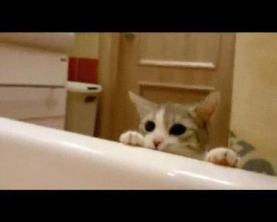 Enlace a Gatos que intentan salvarte la vida cuando te pasa algo en la bañera
