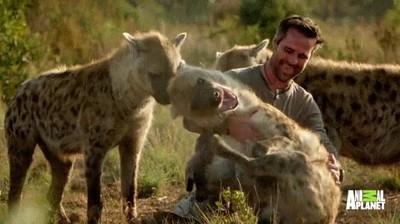 Enlace a Un grupo de hienas demostrando que son capaces de tener amigos humanos