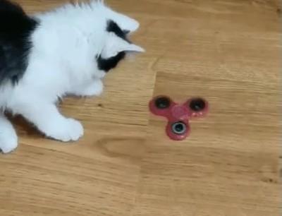 Enlace a Hasta los gatos están enganchados a esta tontería