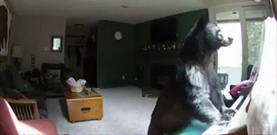Enlace a El típico oso que se te cuela en casa para tocar el piano