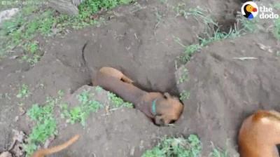 Enlace a El equipo de arqueología de la patrulla canina trabajando duro