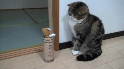 Enlace a No es el gato con los reflejos más rápidos del mundo, desde luego