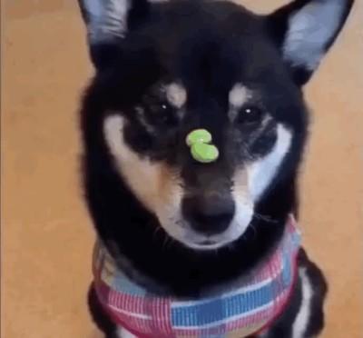 Enlace a Perro ninja más rápido que el ojo humano