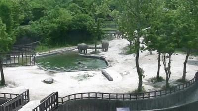 Enlace a  Elefantes acuden al rescate de su bebé al caer en un estanque de agua