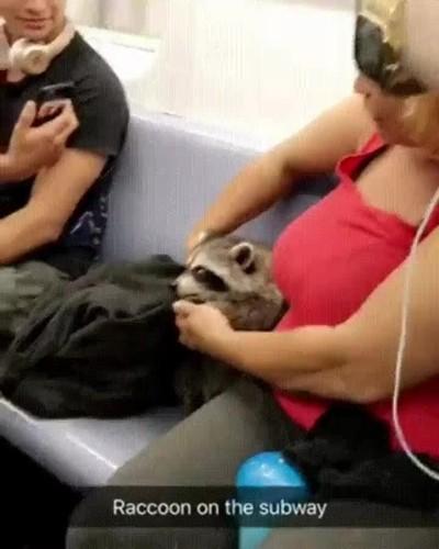 Enlace a En el metro cada vez es más normal encontrarse con criaturas extrañas