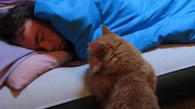 Enlace a Esperando pacientemente a que papá se despierte