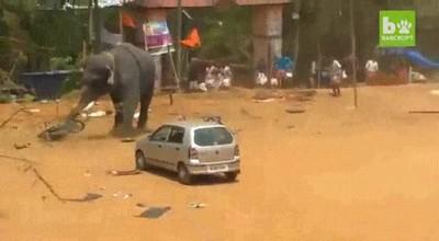 Enlace a Elefante que confunde un coche con una pelota de fútbol