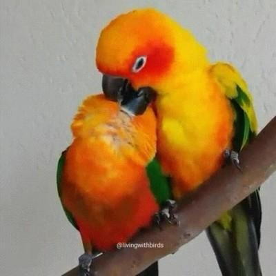 Enlace a Los besos en el cuello son la clave de los preliminares