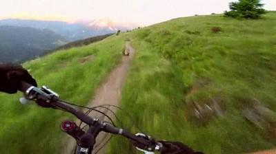 Enlace a Persecución trepidante a una marmota en bicicleta