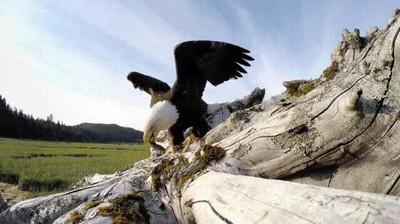 Enlace a Nunca dejes una cámara de cientos de euros al alcance de estos animales
