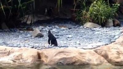 Enlace a Este pingüino soy yo buscando mi propósito en la vida