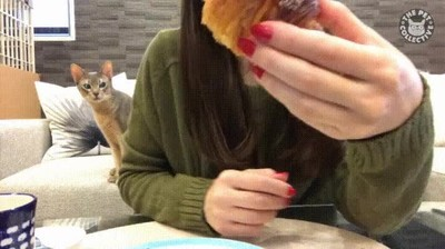 Enlace a ¿Qué estás comiendo, humana? La cara es genial