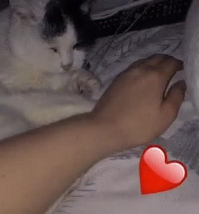 Enlace a Dáme la mano y no digas nada