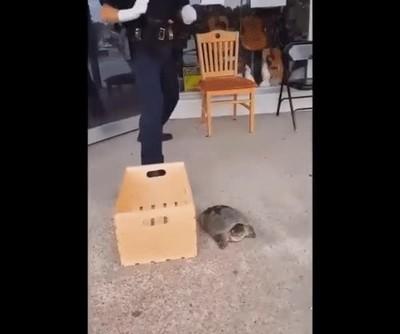 Enlace a Policía VS uno de los animales más feroces del mundo