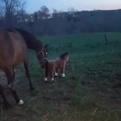 Enlace a A los caballos no les hace demasiada gracia que los engañen de esta forma
