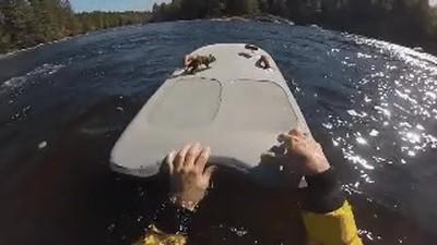 Enlace a Rescatando a una ardilla rayada de una muerte segura