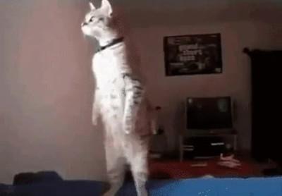 Enlace a Gatos demasiado curiosos con lo que pasa en el exterior