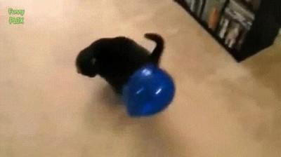 Enlace a Gatos que solo necesitan un globo para estar entretenidos