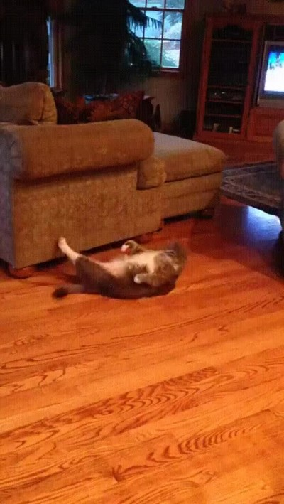 Enlace a Gato entrenando para lucir abdominales este verano