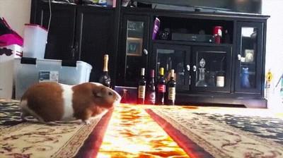 Enlace a The floor is lava llevado a un nuevo nivel