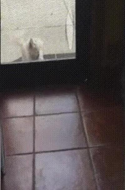 Enlace a Perros que invitan a sus colegas a entrar en casa