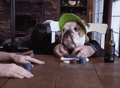Enlace a Perros con cara de saber jugar a Poker como un profesional