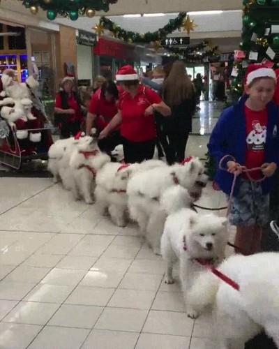 Enlace a Santa Claus está ya reclutando su nuevo ejército de renos