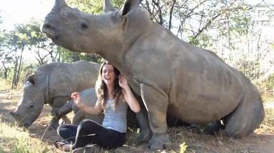 Enlace a Truco infalible para dormir a un rinoceronte en cuestión de segundos