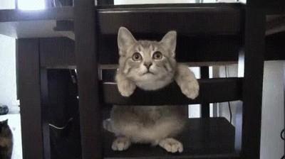 Enlace a La reacción de mi gato cuando hemos encendido la nueva impresora