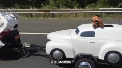 Enlace a Perros suficientemente independientes para viajar en su propio coche