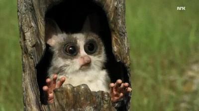 Enlace a Así se graban la mayoría de los documentales de animales. Con cámaras falsas