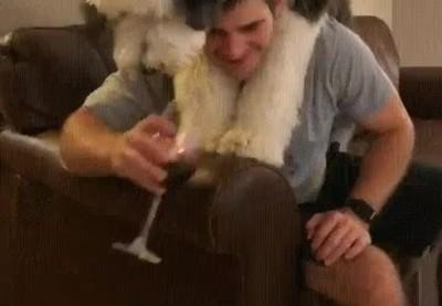 Enlace a Perros que en otra vida fueron catadores de vino