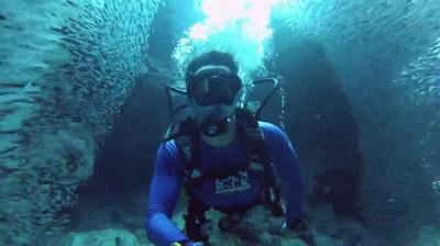 Enlace a Submarinista cruzando por la mitad de un banco de peces