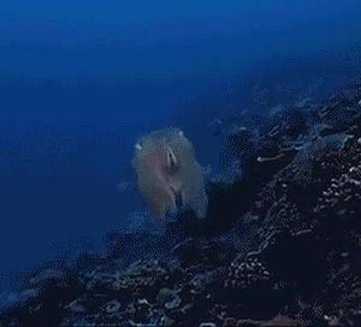 Enlace a Hay algunas criaturas marinas que parecen salidas de una pesadilla