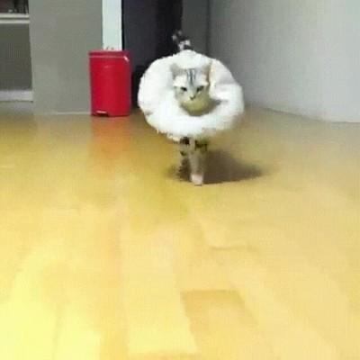 Enlace a Gatos que se creen protagonistas de la Pasarela Cibeles