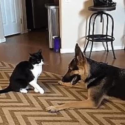 Enlace a Perro y gato demostrándose amor mútuo