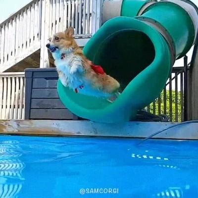 Enlace a ¡Super-perro al rescate!
