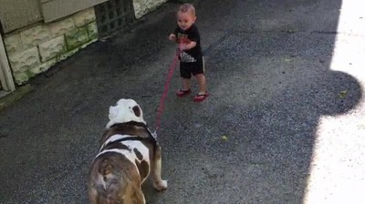 Enlace a Chaval de 11 meses intentando pasear a su perrito