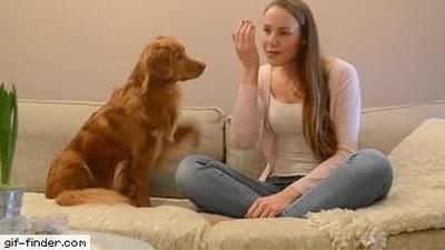 Enlace a Este perro y su compañera han aprendido a compartir sus mayores secretos