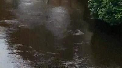 Enlace a Caballos con una curiosa manera de andar sobre terreno mojado