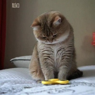 Enlace a Así se distraen hoy en día los gatos millenials