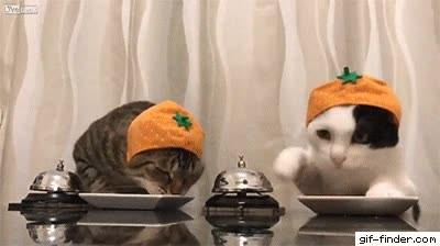 Enlace a Dos gatos pidiendo forma de la manera más educada