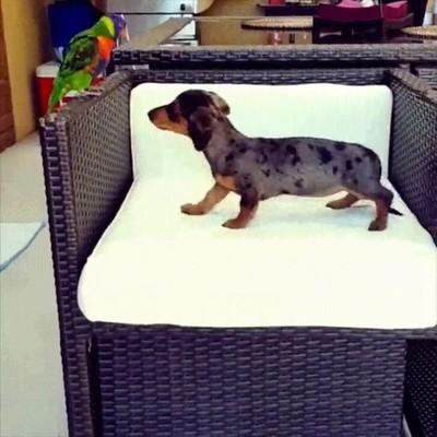 Enlace a Demostrando quién es el animal que manda en casa