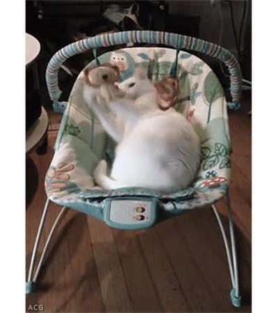 Enlace a Un gato no necesita nada más para pasar un buen rato